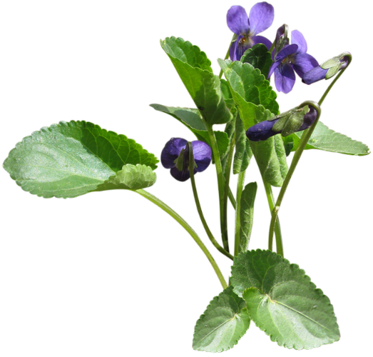 Tube fleur violette - Image fleur violette ...